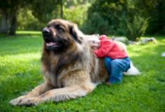 Lemmikloom hoolitseb sinu tervise eest